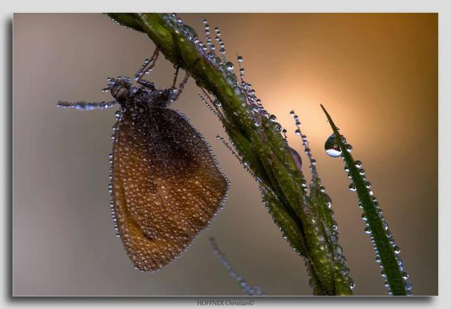 wetbug