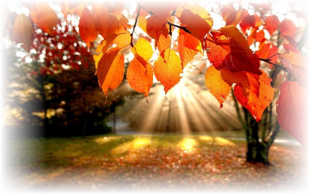 fall-foliage-wallpaper1